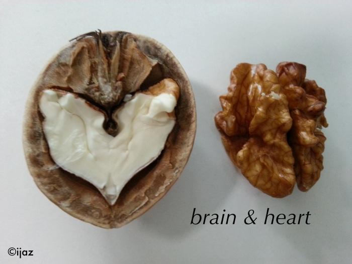 Bir Kabukta Akıl ve Kalp..